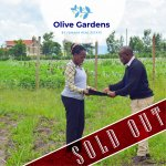 Olive gardens – soldout 1
