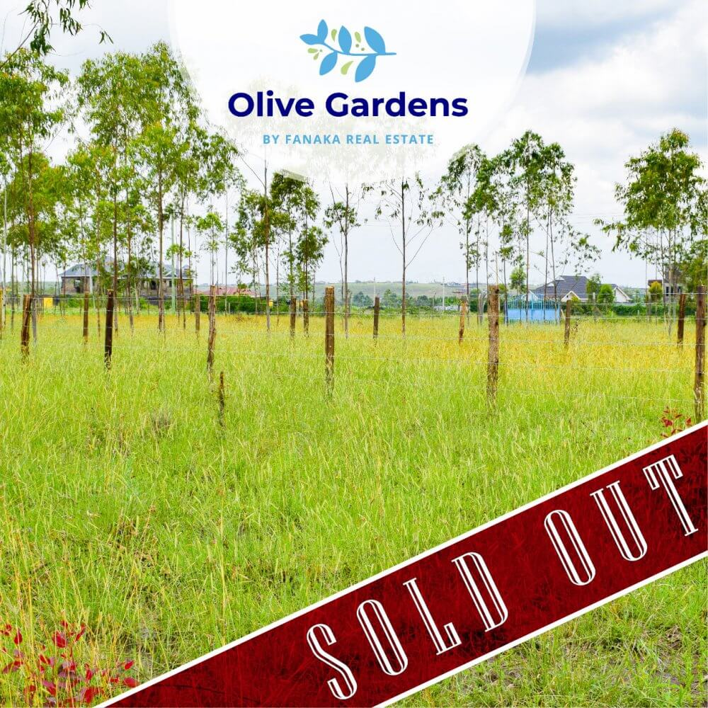 Olive gardens – soldout 2